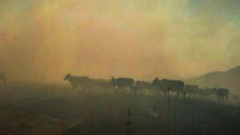 Incêndios na caatinga em Riacho de Santana, Tanque Novo e Macaúbas
